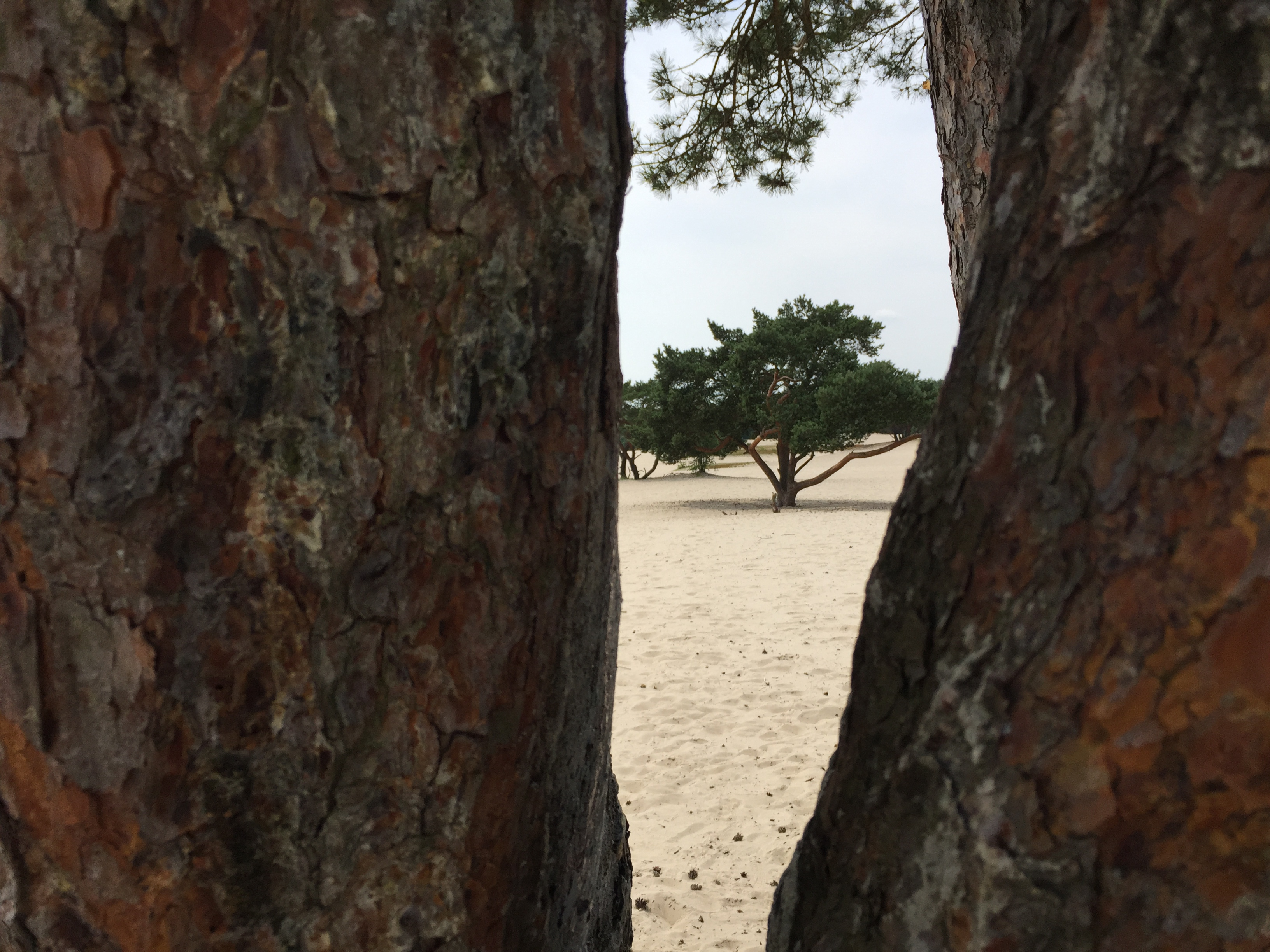 Soester duinen