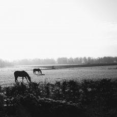 Mooi kiekjes van Willem Keesom