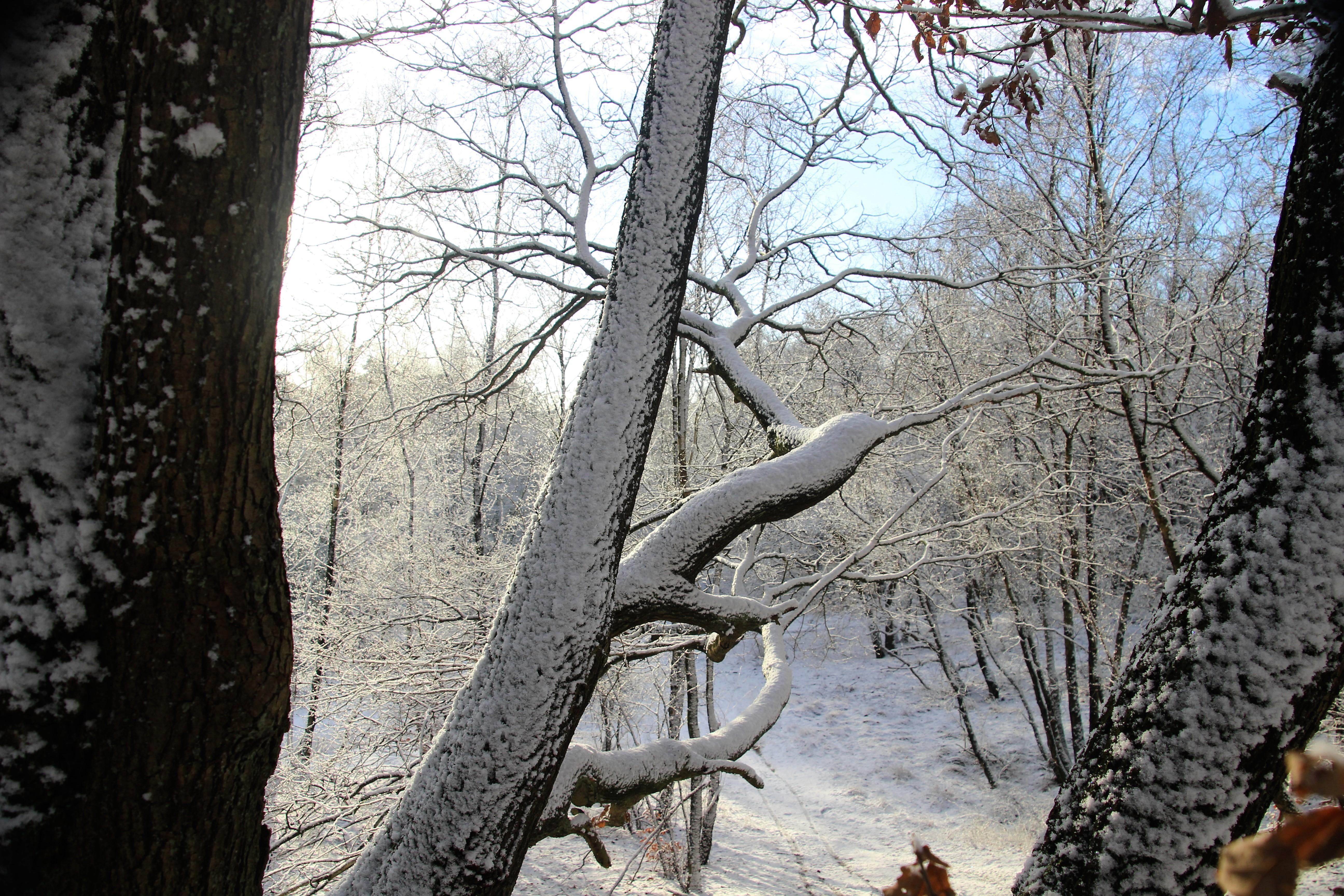 Sneeuw op De Stompert